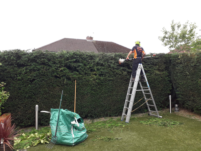 Conifer Hedge Reduction in Bolton