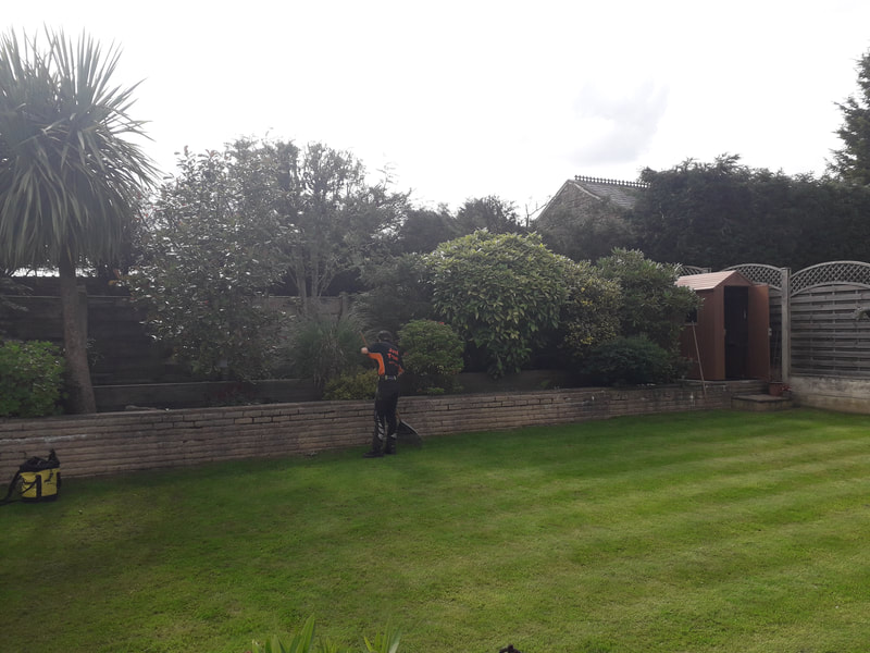 Conifer Hedge Reduction in Bury
