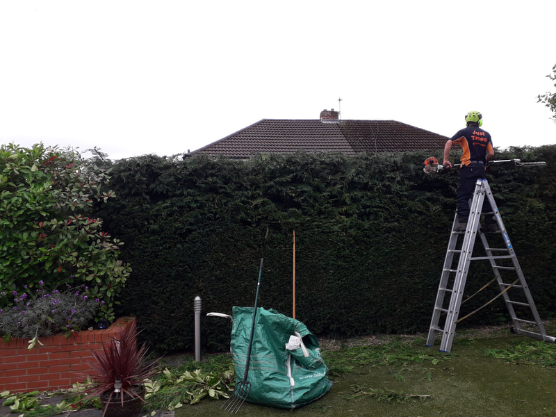 Conifer Hedge Reduction in Radcliffe, Bolton
