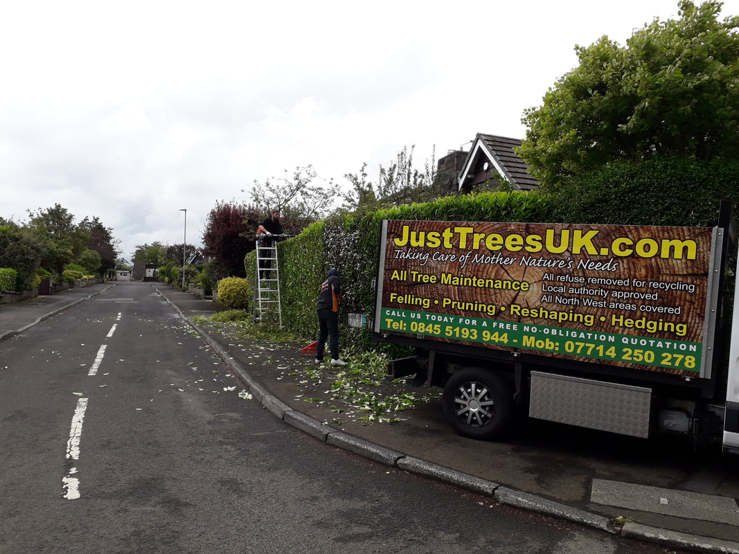 Hedge Care in Bolton