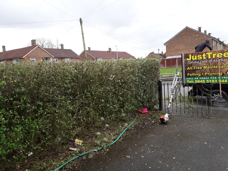 Hedge Reshaped in Bolton