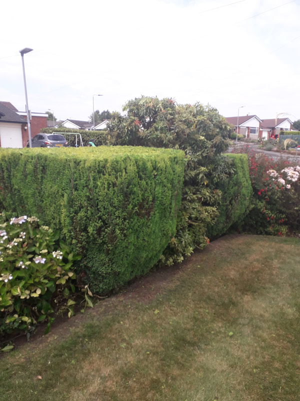 Hedge Trimming Bury