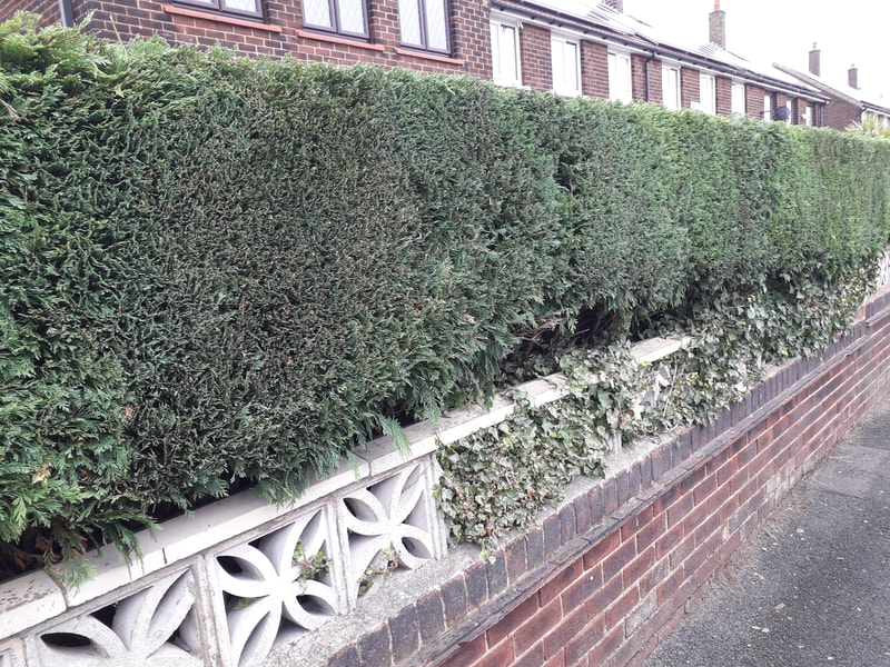 Hedge Trimming in Bolton