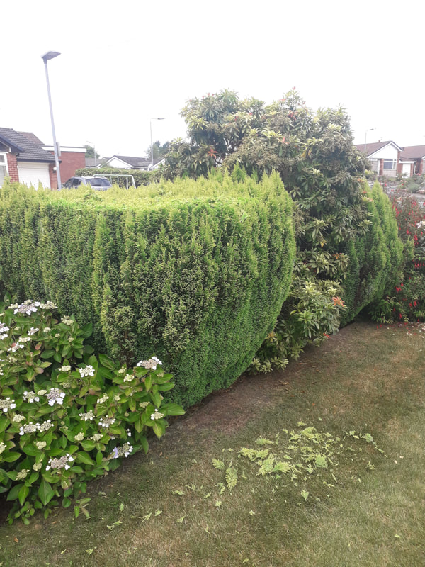 Hedge Trimming in Bury