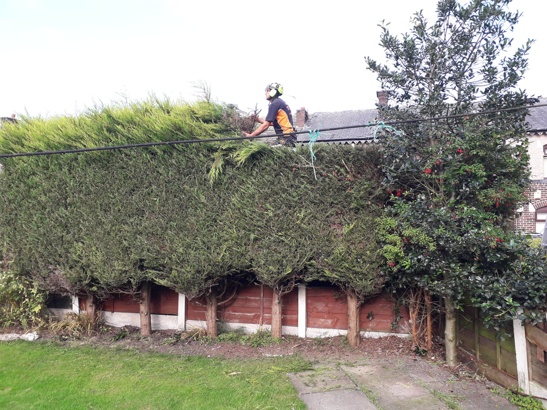Hedge Trimming in Green Mount, Bury