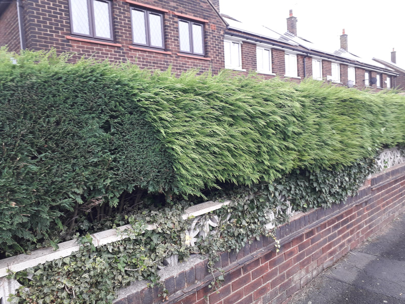 Hedge Trimming in Westhoughton, Bolton