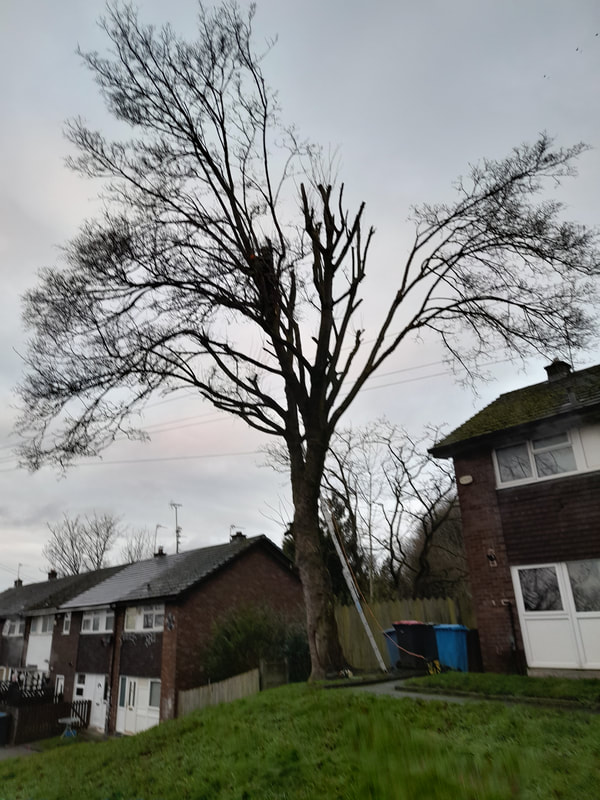 Large Tree Removed in Salford