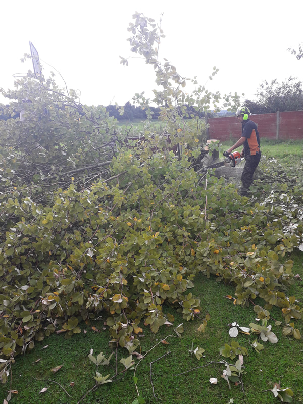Large Tree Safely Felled in Bolton