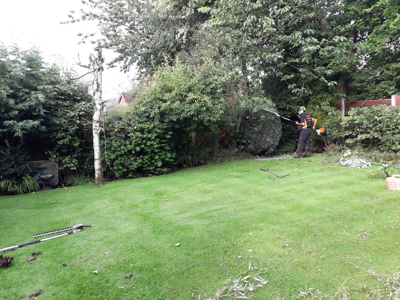 Large Trees Removed in Bolton