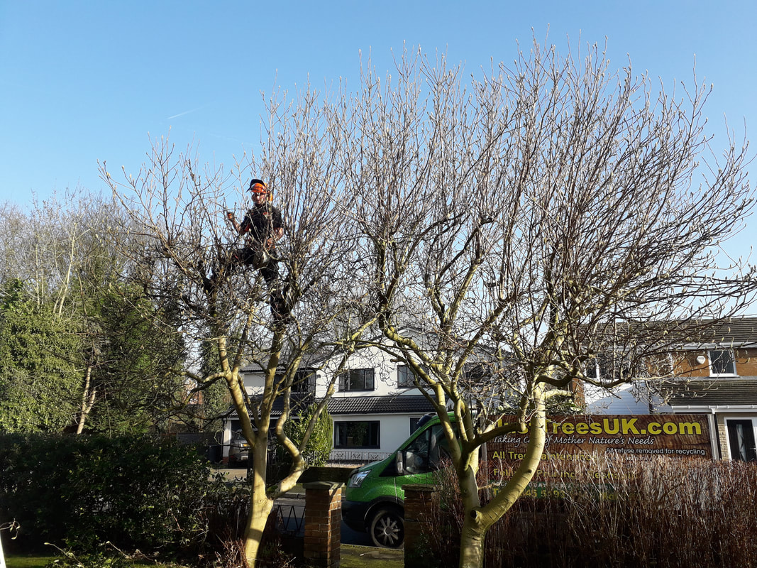 Tree Reduction in Bolton