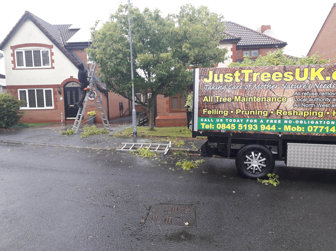 Tree Reshaping in Westhoughton, Bolton